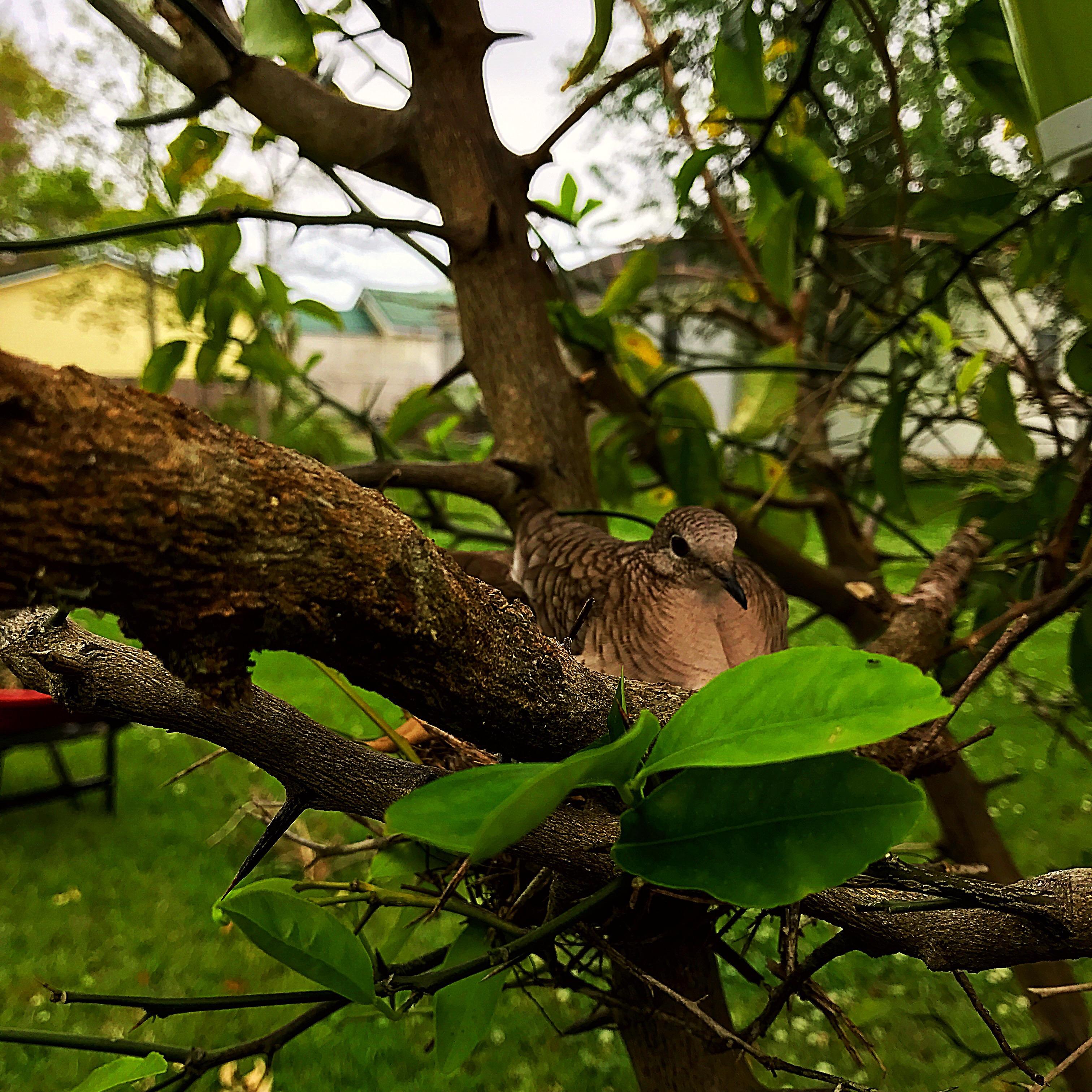 spring time around my yard u2013 everyday biologist